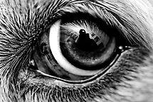 self - Nellie's eye view by blackspark