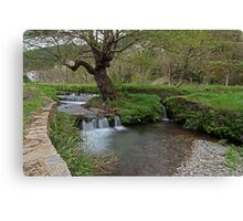 Water rushing by tree Canvas Print