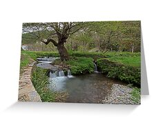 Water rushing by tree Greeting Card