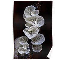 Fungi Season 1104 Poster