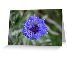 Floating Flower Greeting Card