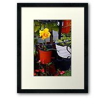 Japanese Daffodil in Alameda-2 Framed Print