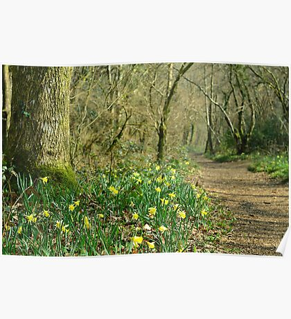 Path through the Daffodils Poster