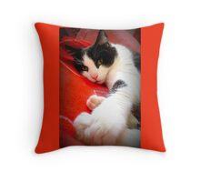One crazy tomcat Throw Pillow