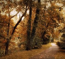 Woodland Path by Jessica Jenney