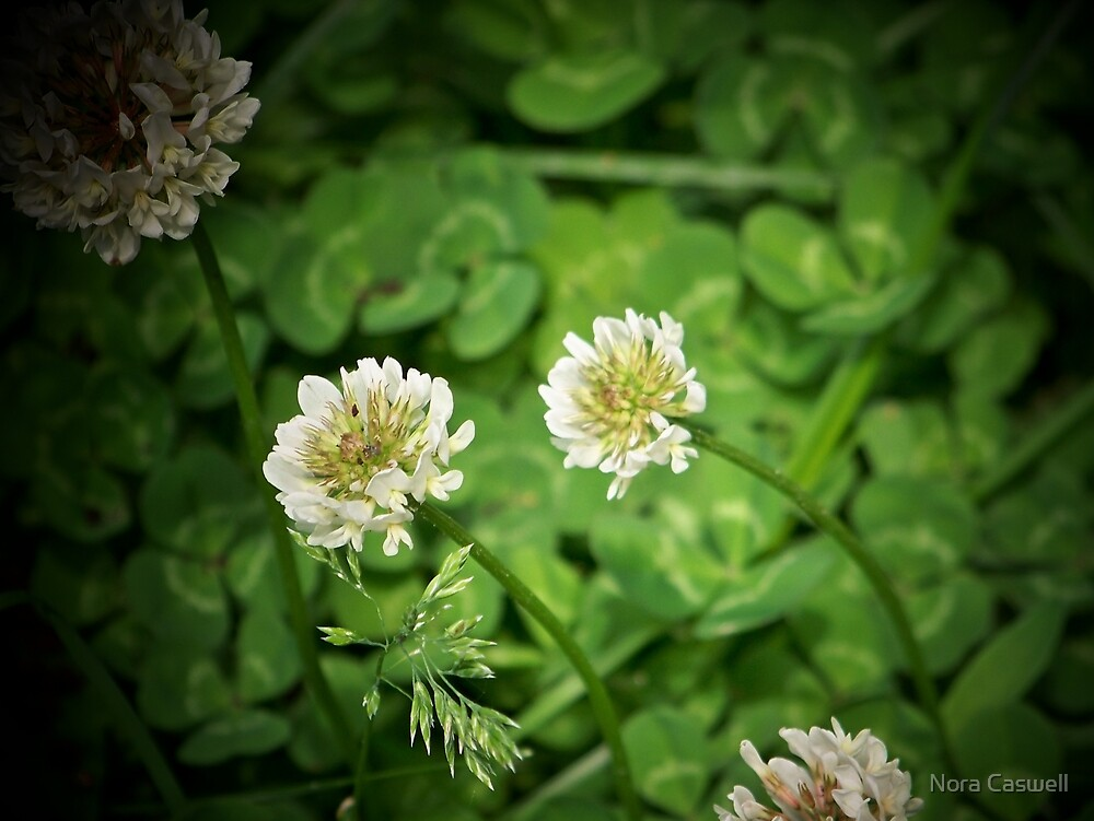 Beautiful Clover by Nora Caswell