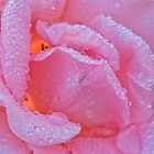 Rose with Dewdrops by Martie Venter