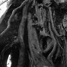 Church Preen yew tree by Joanne Plimmer