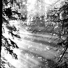 Rainforest light by Al Williscroft
