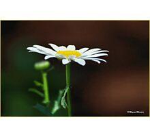 SIMPLICITY - EENVOUD Photographic Print