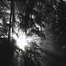 Shine though by Al Williscroft