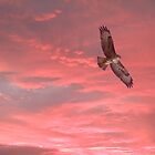 Buzzard at Sunset by steveransome