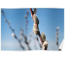 Freshness and Fuzziness of Spring Poster