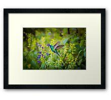 My Secret Garden, Green Violet Eared Hummingbird Framed Print