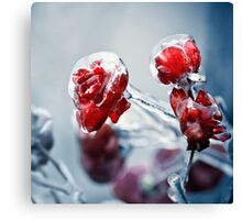 Iced roses 2 Canvas Print