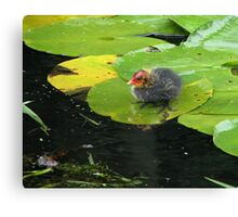 """""""Mum, where are you???"""" Canvas Print"""