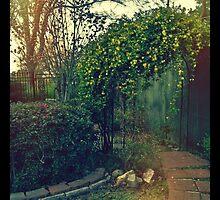 Mom's Backyard by ampsims