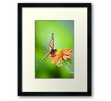 Butterfly 17 Framed Print