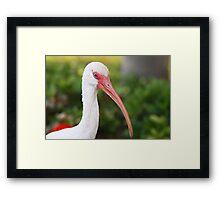 Elegant Beak Framed Print