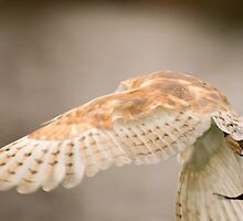 Wings - flight of an owl by Angus Russell