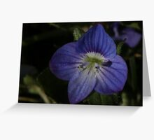 super tiny blue flower Greeting Card
