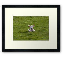 Exmoor`s New Born Lamb Framed Print