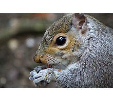 Grey Squirrel Photographic Print
