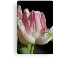 The Pink parrot Tulip Canvas Print