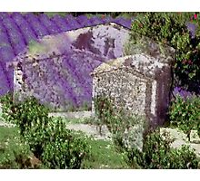 Lavender, collage Photographic Print