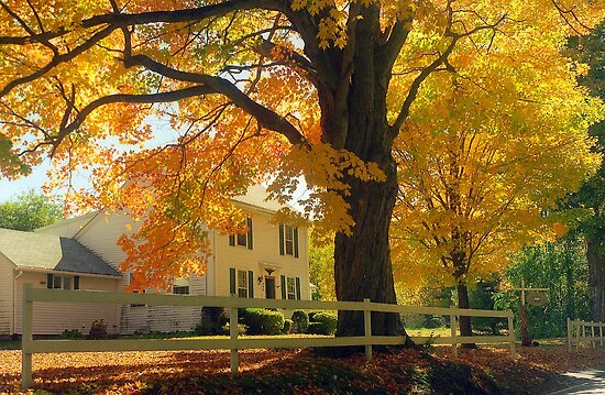 Connecticut Autumn by Alberto  DeJesus
