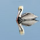 Placid Pelican Swimming in Sunlight by Joe Jennelle