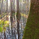 The Light of Congaree II by BrianDawson