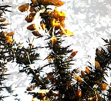 Gorse And Ivy- A Digital Double Exposure by Jonathan Goddard