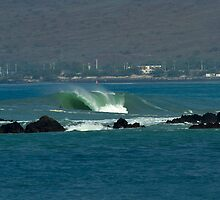 Heavy Hitter on Big Island by Vince Gaeta