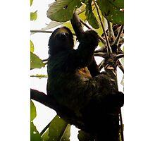 Three-toed Sloth Photographic Print