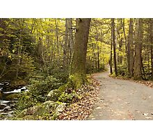 Roaring Fork Nature Trail   Photographic Print