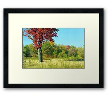 Red Autumn Tree Framed Print
