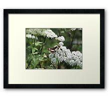 Butterfly And White Flowers Framed Print