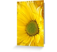 Close Up of Yellow Mum Greeting Card
