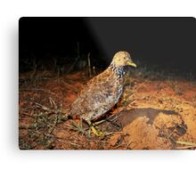 plains wanderer Metal Print