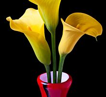Three Yellow Calla Lililes by Garry Gay
