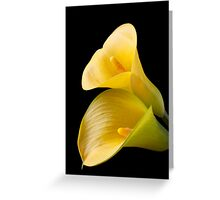 Pair of Yellow Calla Lilies  Greeting Card