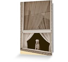 Oh!  Look At That Doggie In The Window!!! Greeting Card