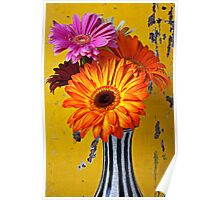 Colorful Mums In Striped Vase Poster