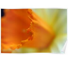 Daffodil curves Poster
