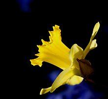 Daffodil by Al Mechler