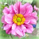 Japanese Anemone ~ filled variety by ©The Creative  Minds