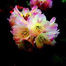 """""""Colorful Rhodies"""" by Lynn Bawden"""