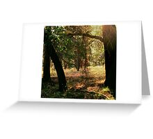 From the Shadows Greeting Card