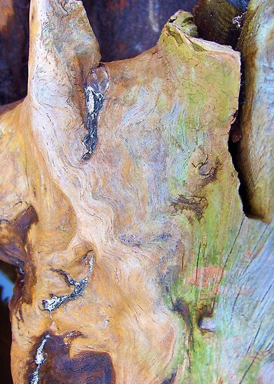 Rainbow Driftwood by Kathilee